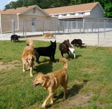 Dogs playing at Smith Farms Kennels