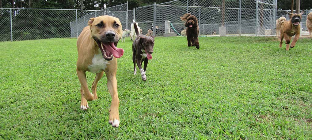 Luxurious Dog Boarding Kennel in Metro Atlanta