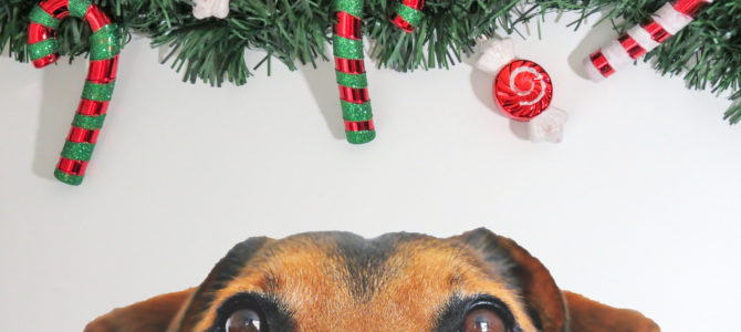 Tips for Planning Your Pet's Holiday Boarding Stay